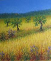 Campo di grano tra gli ulivi