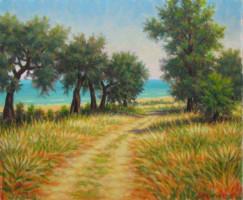 Sentiero tra ulivi